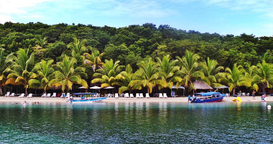 A beautiful palm tree lined beach is surrounded by lush green jungle