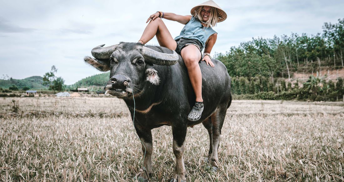 traveler on an ox in rural Vietnam