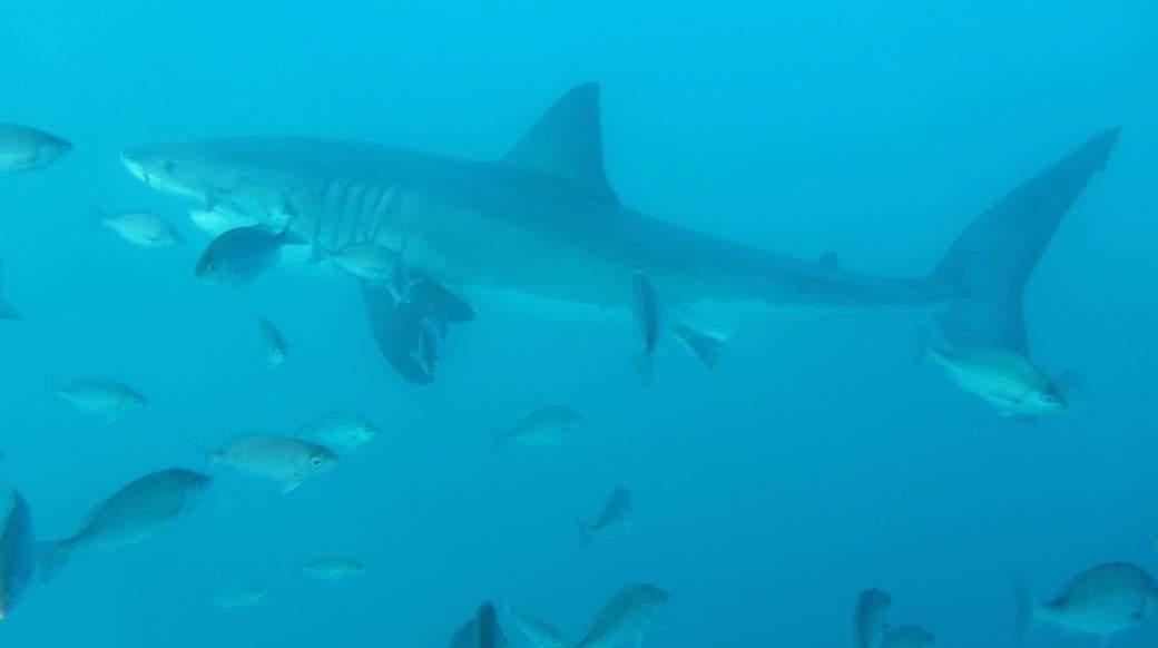 shark tour south africa