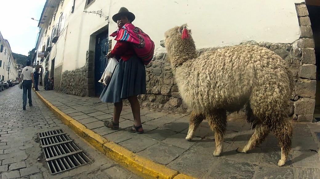 a local woman walking an alpaca in cusco peru