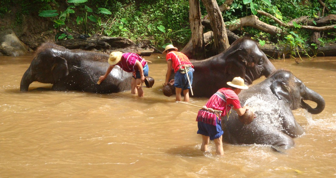 Three elephants have a bath in a river in Northern Thailand