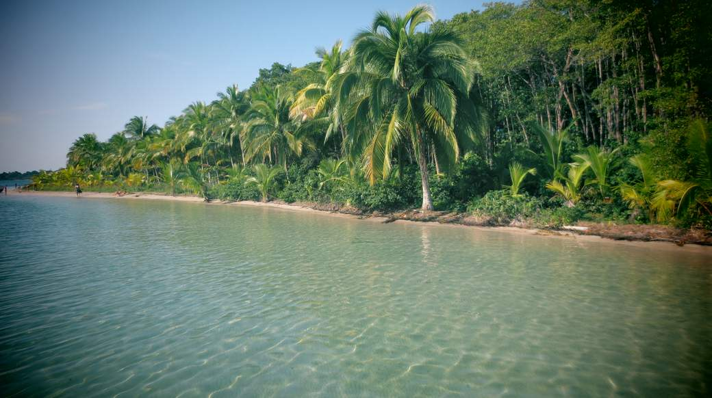 palm trees along the water in panama