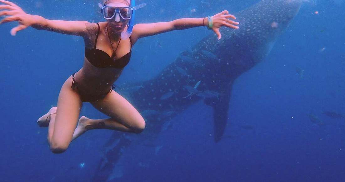 A girl swimming with whale sharks in Donsol Philippines