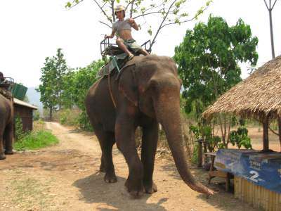 Chiang Mai & Hill Trekking