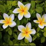 4whiteishflowers.jpg