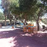 A large space with big pine trees, hammocks and bar style tables and chairs for people to relax around