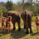 Elephant butts and five travelers