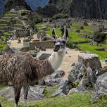 Photo bomb by a llama at Machu Picchu in Peru