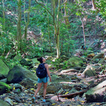 Hiking in the jungle in Tayrona Park Colombia